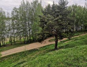 Фото Петровский парк
