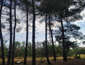 Фото Ботанический сад при ДГУ