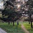 Фото Парк Дружбы народов в Минске 9