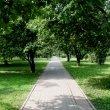 Фото Дмитровский парк в Рыбинске 6