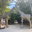 Фото Парк 50-летия Октября в Махачкале 9