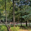Фото Парк Ленинского комсомола в Махачкале 6