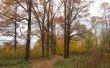 Фото Петровский парк в Рыбинске 4