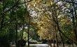 Фото Парк 50-летия Октября в Махачкале 3