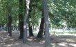 Фото Парк Ленинского комсомола в Махачкале 2