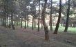 Фото Ботанический сад при ДГУ 1