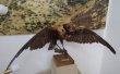 Фото Национальный Музей Республики Дагестан им. А. Тахо-Годи 6