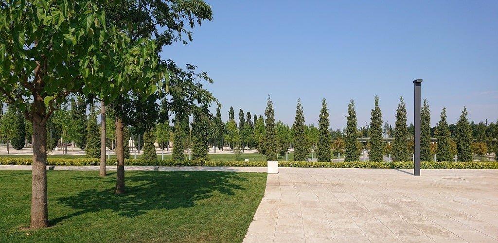 Деревья парка