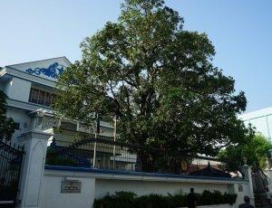 Фото Президентский дворец в Мале