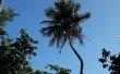 Фото Остров Виллингили 4