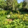 Фото Ботанический Сад ИвГУ 8