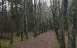 Фото Ботанический Сад ИвГУ 2