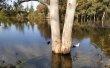Фото Национальный лесной парк Аталасса 4